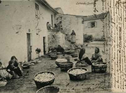 Mulleres lañando sardiña na Moureira