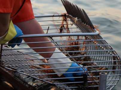 Marisqueo a bote