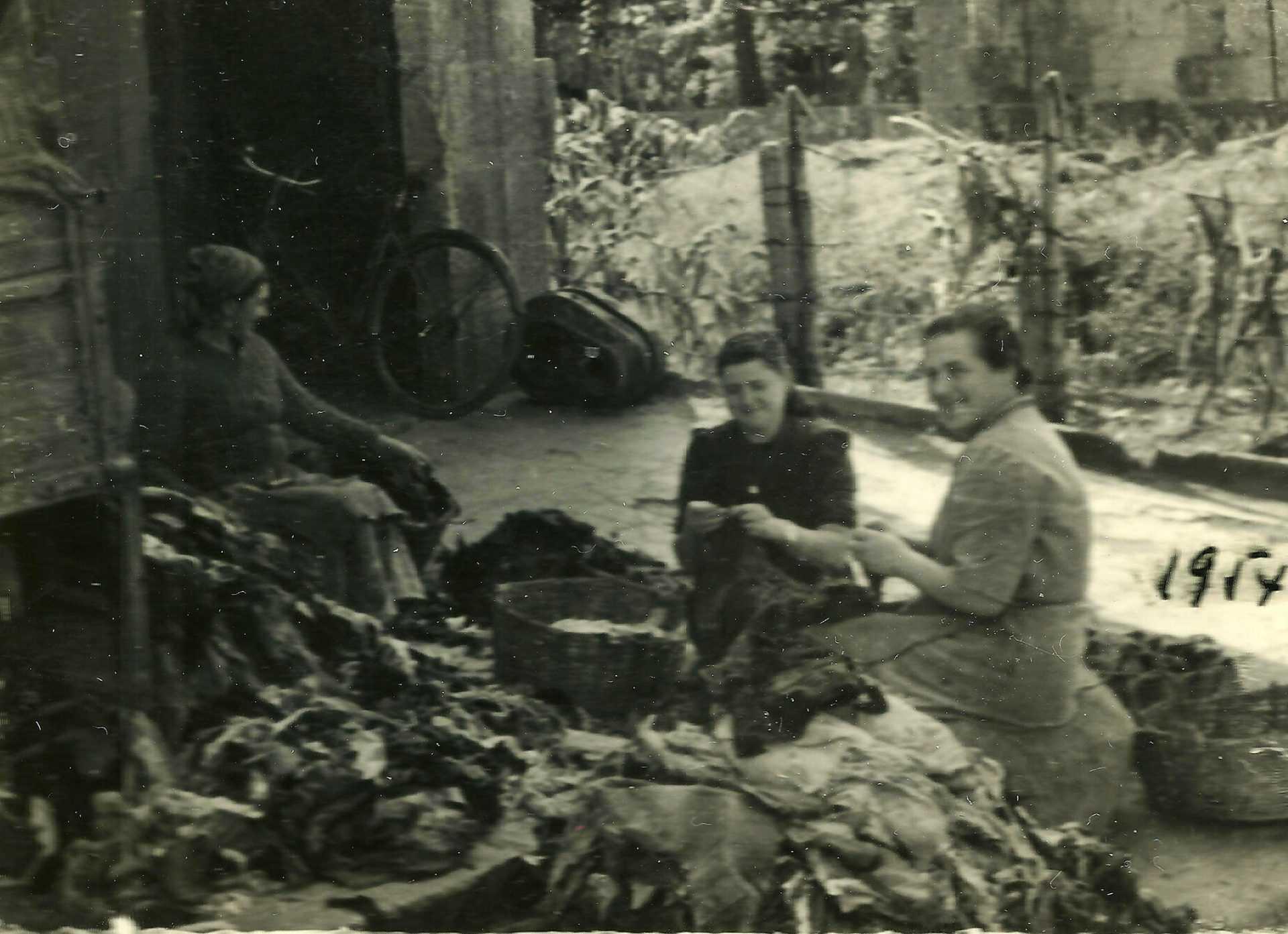 Dalia, Rosa e Juana seleccionando farrapos